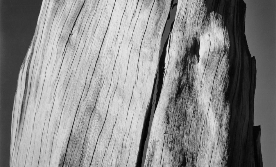 Ansel Adams, White Stump, 1936 © 2011 The Ansel Adams Publishing Rights Trust